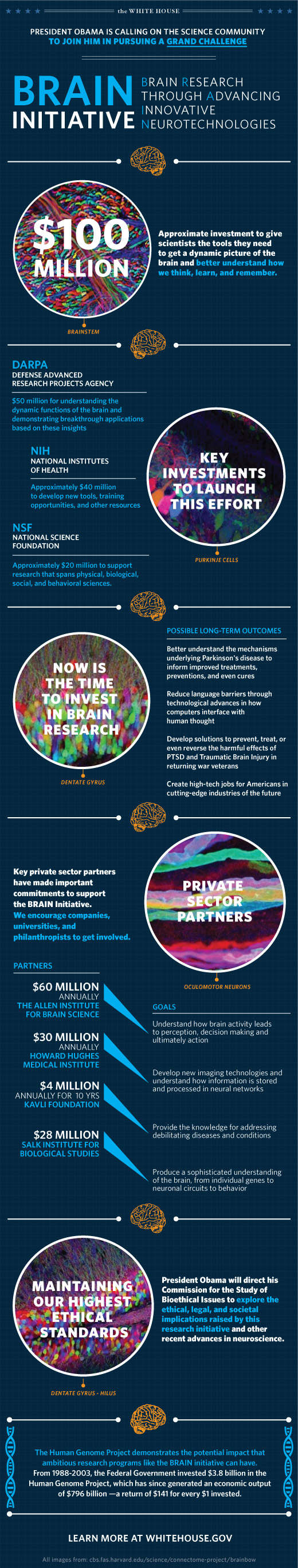 wh_brain_mapping_infographic_2013_blog.jpg