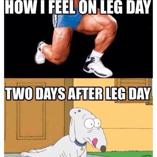 Leg-Day-Day-After.jpg