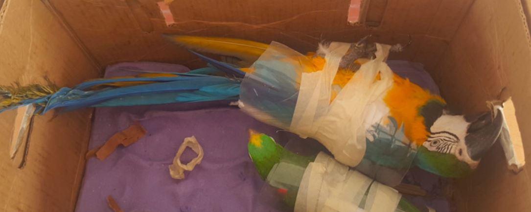 bird traffick.JPG