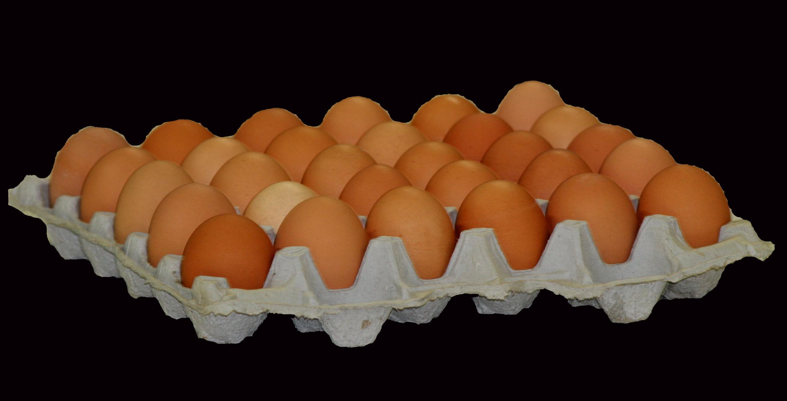 Eggs 01242013.jpg