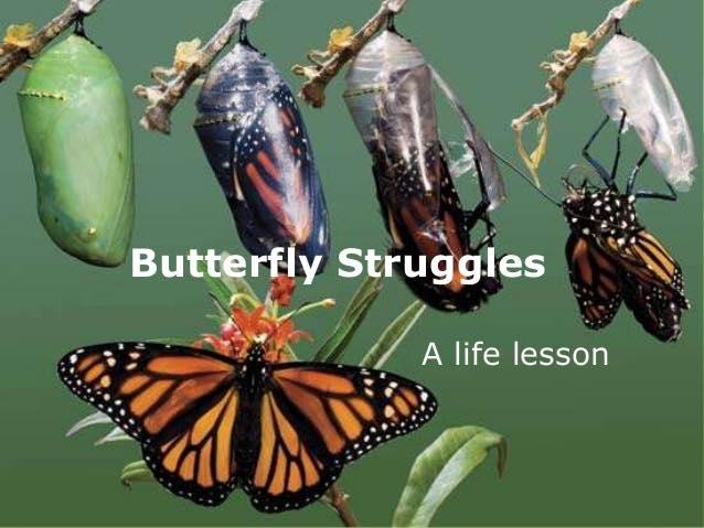 butterfly struggles.jpg