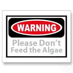 please don't feed the algae