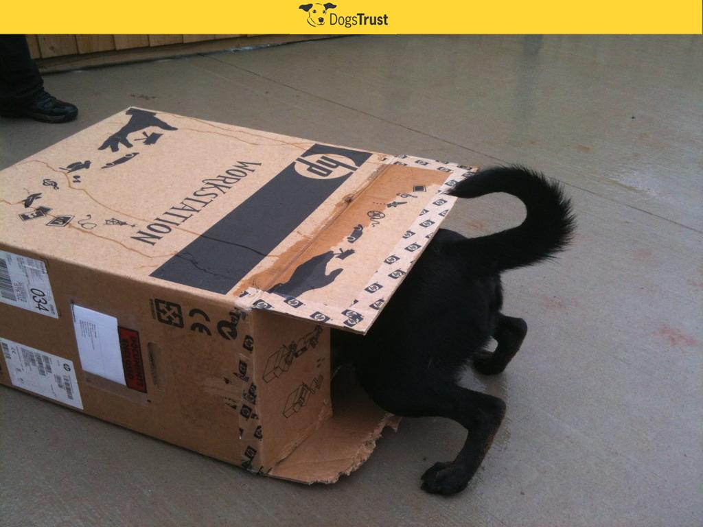 Tommy-Loughborough-cardbox-.jpg