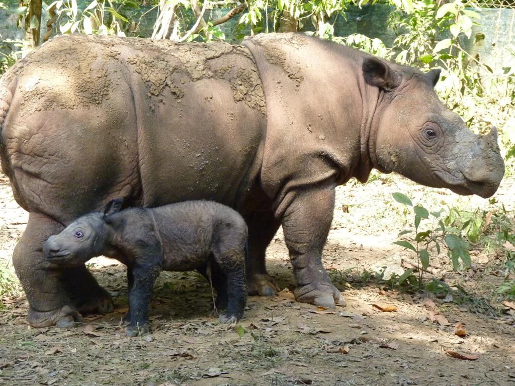 Ratu and baby_online.jpg