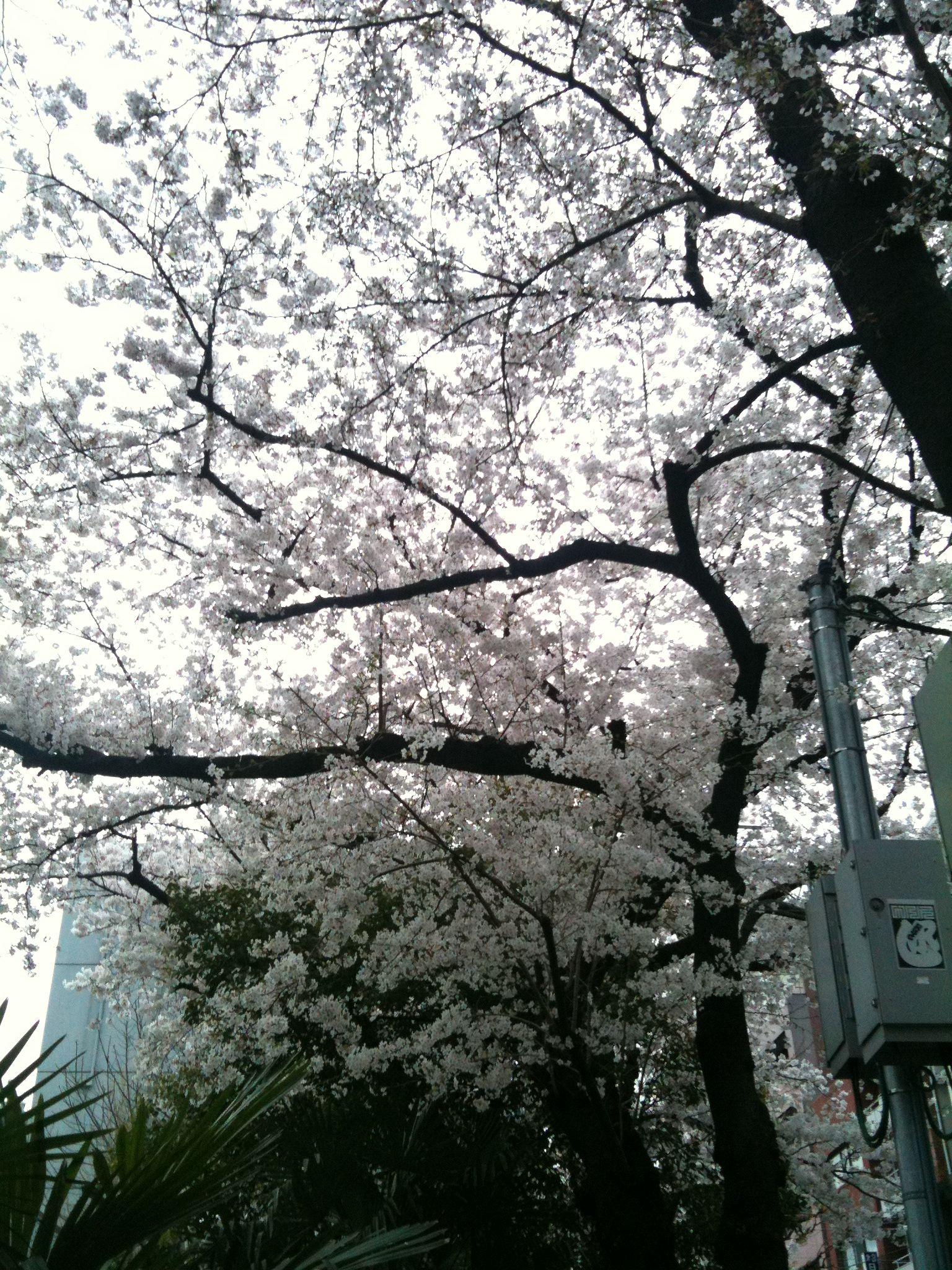Photo on 2011-04-09 at 16:37.jpg