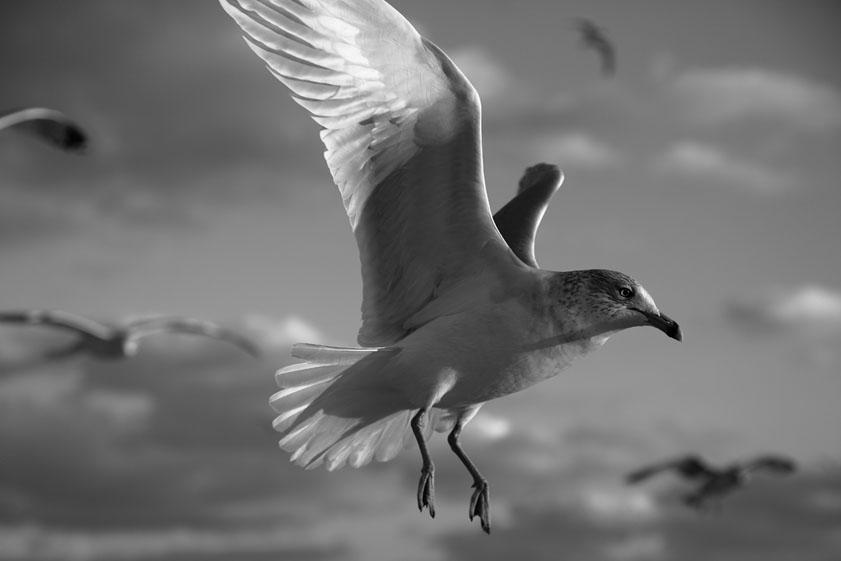 Crudo In Flight.jpg