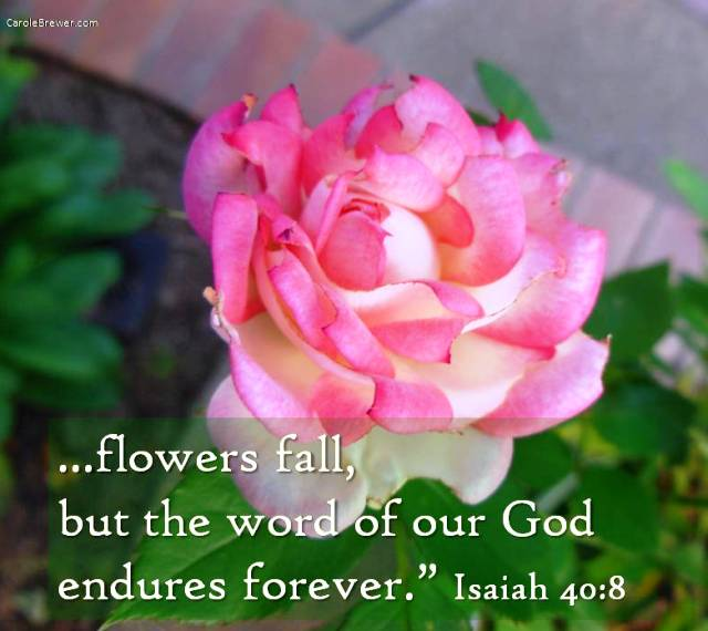 ...flowers fall, but the word.jpg