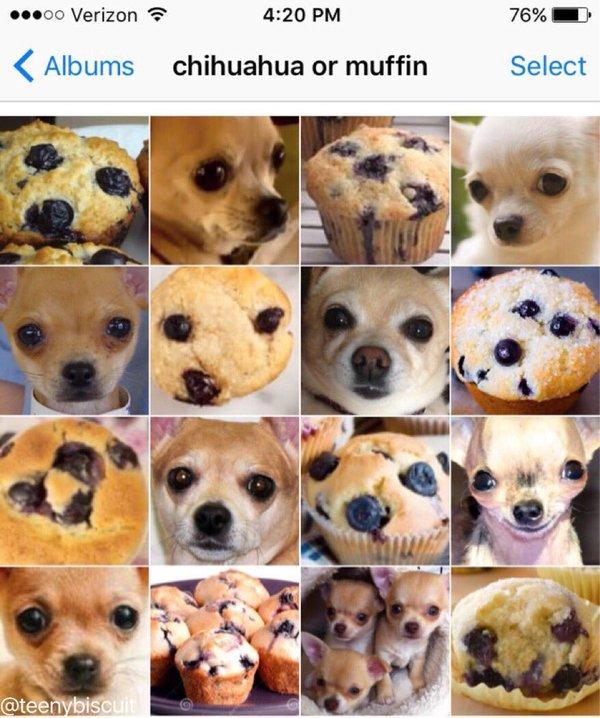 Food Or Dog_3.jpg