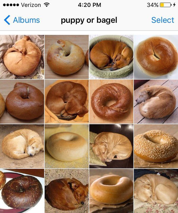 Food Or Dog_1.jpg