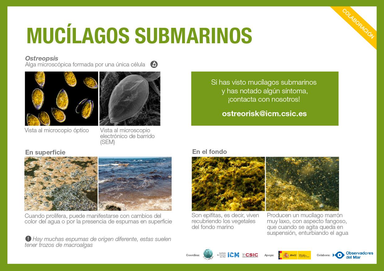 FICHA- mucilagos_ESP_02-02.jpg