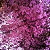 Thumbnail of Photo on 2013-03-29 at 11:14.jpg