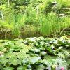 Thumbnail of Photo on 2013-07-01 at 12:03.jpg