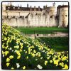 Thumbnail of a photo from user HRP_palaces called spanishgardenerinlondon.jpg