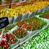 Thumbnail of a photo from user Holland_com called flower-market-amsterdam_high_rgb_955.jpg