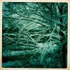 Thumbnail of a photo from user brklib called winter.jpg