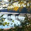 Thumbnail of a photo from user AT_Conservancy called ATC_RP3880_20120925_082158-scr.jpg