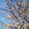 Thumbnail of a photo from user _tokuhiro called image.jpg