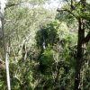 Thumbnail of canopy.jpg