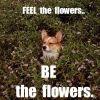 Thumbnail of flowers.jpg
