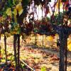 Thumbnail of a photo from user Travelzoo called AndrewMurrayVineyardsWinery.jpg