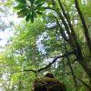 Thumbnail of 20081006140227_original.jpg
