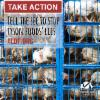 Thumbnail of a photo from user ALDF called ShareGraphic_TakeActionTysons.png